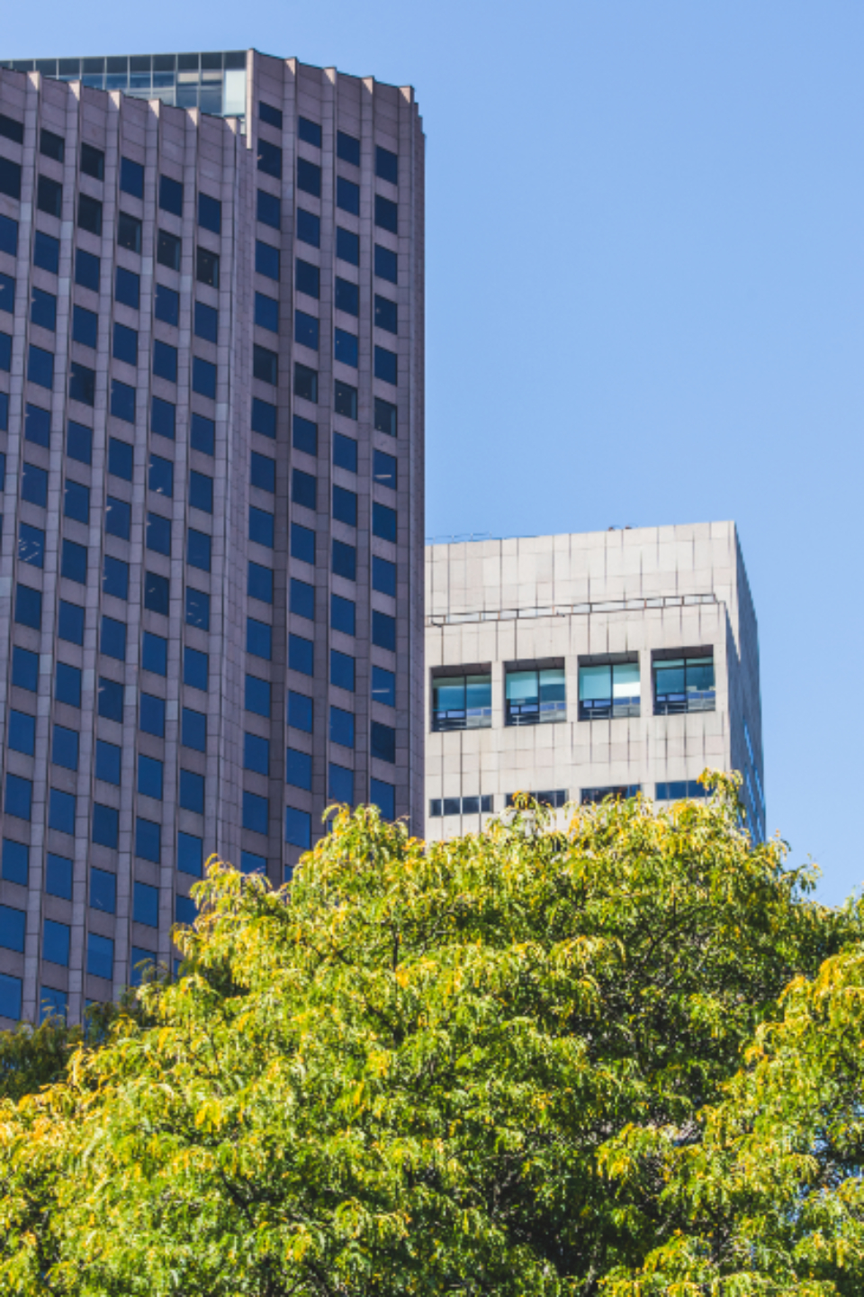 city sky windows downtown architecture daytime business exterior modern structure office buildings tree facade