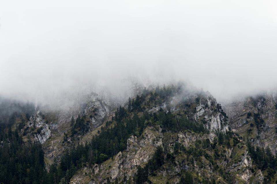 highland mountain trees plants nature landscape fogs cold