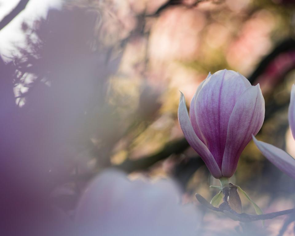purple petal flower bloom nature plant blur