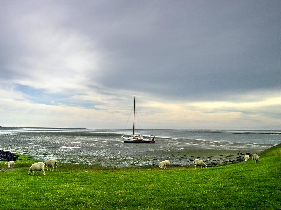 sailboat water ocean sea grass field animals sheep sky grey clouds