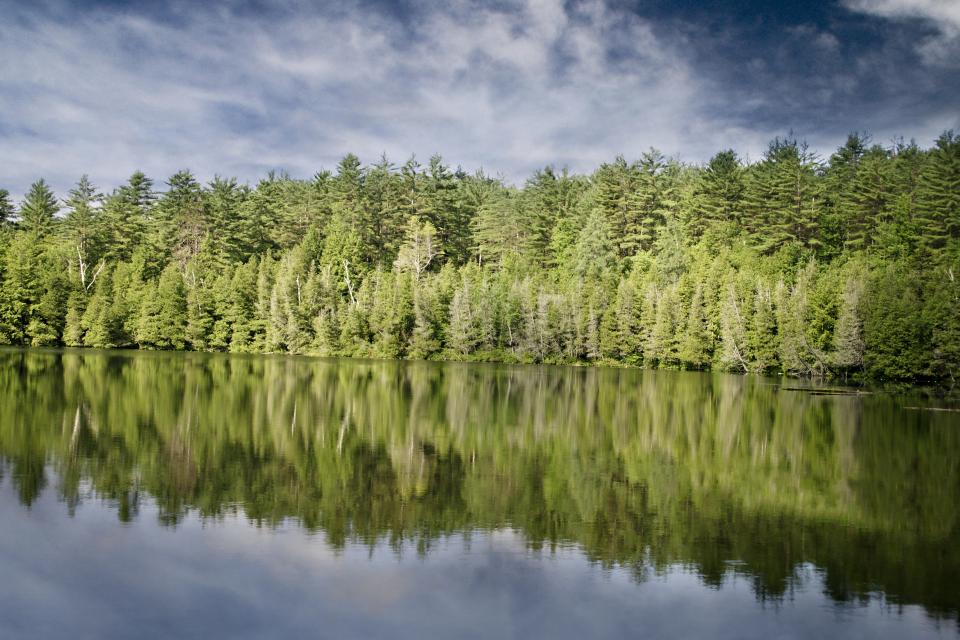 green trees forest nature water reflection sky clouds