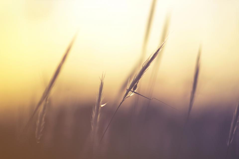 grass blur outdoor nature plant