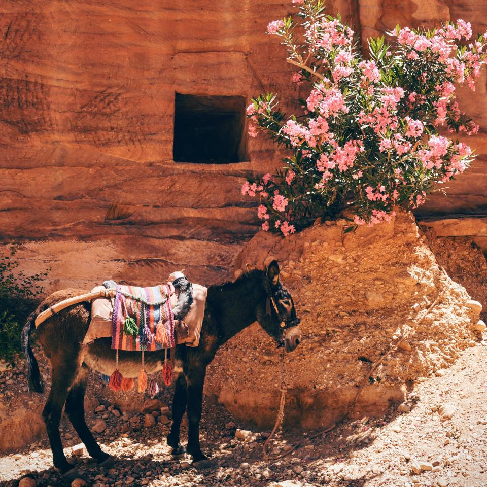 donkey horse animal pet ride flower plant outside rocks desert