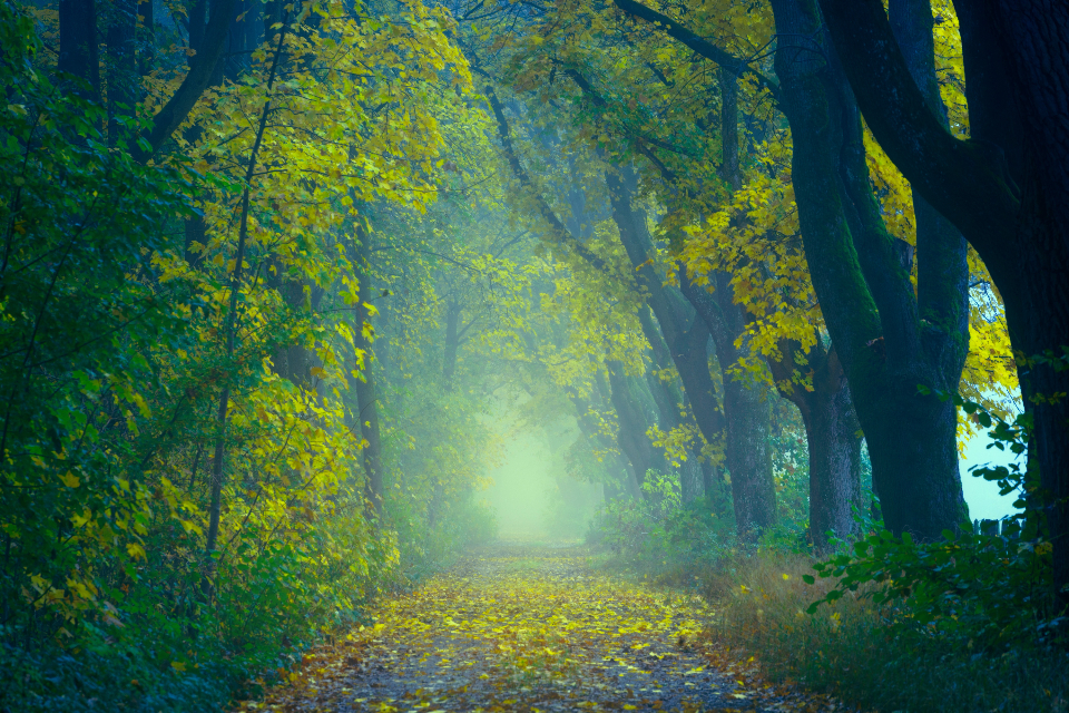 enchanting forest walk hike path nature tree woods green leaves nature landscape scenery mysterious