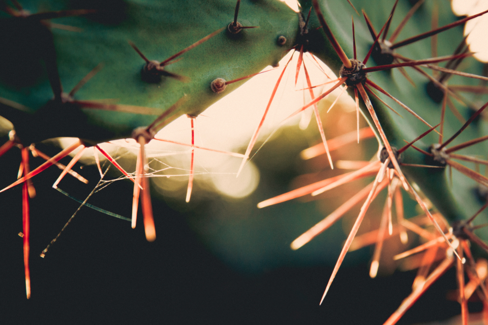 cactus sunset goldenhour sunlight green grass nature