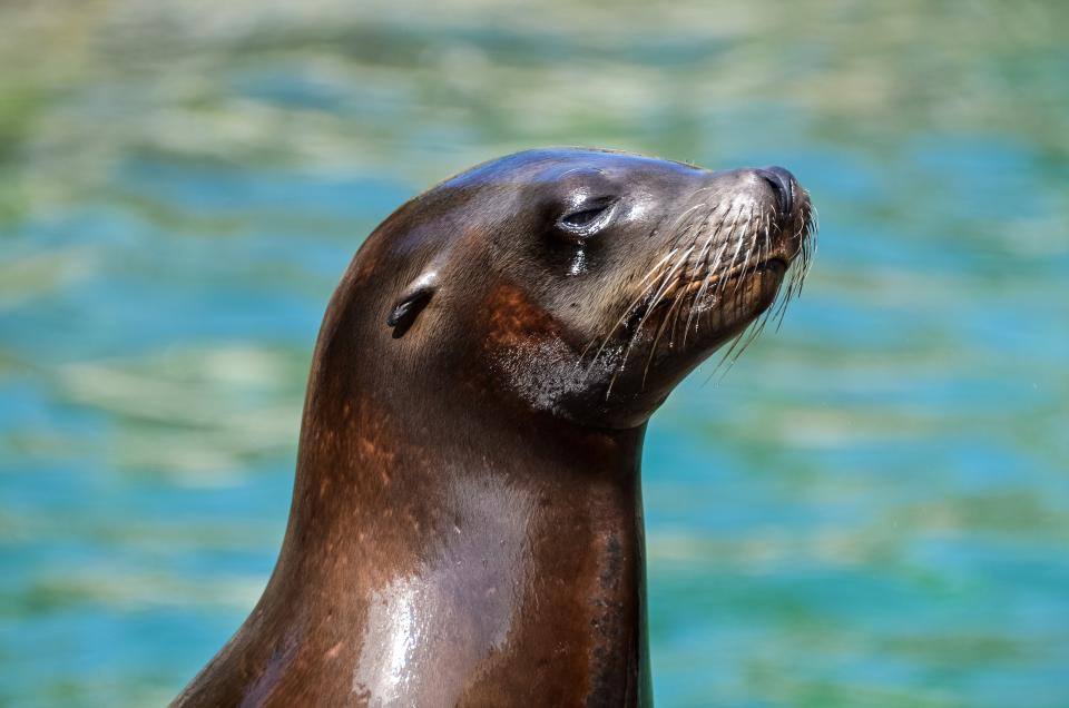 sea lion wet aquatic animal ocean swimming pool
