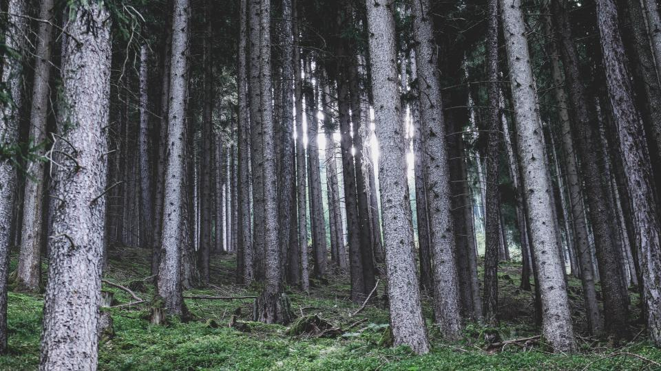 nature landscape woods forest sunlight sunshine camp bonding vacation travel adventure