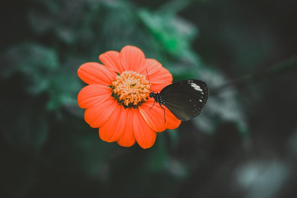 orange flower petal bloom butterfly insect nature