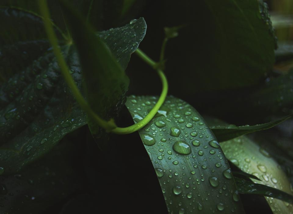 green leaf plant nature wet raindrops water