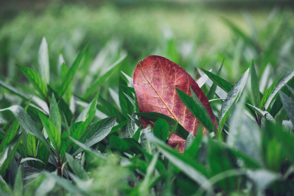 nature green plants grass fallen leaf leaves veins