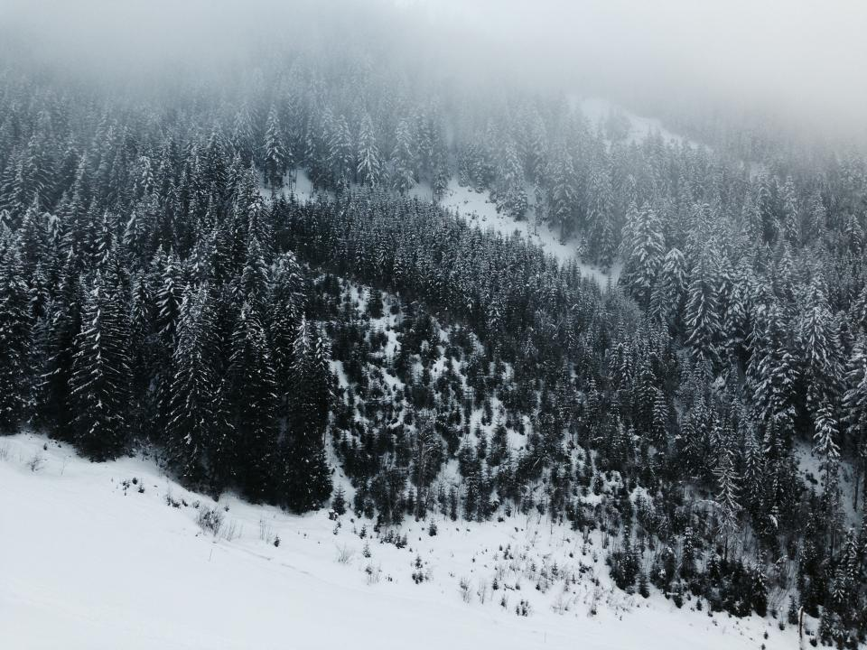 snow winter cold weather trees plants nature mountain highland fog