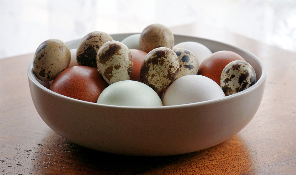 eggs chicken quail bird food bowl ingredients cooking kitchen table