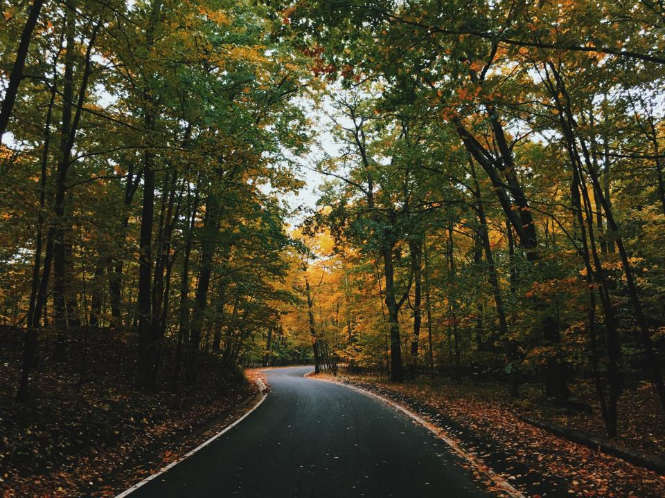 trees clolorful plant forest nature leaves fall autumn road
