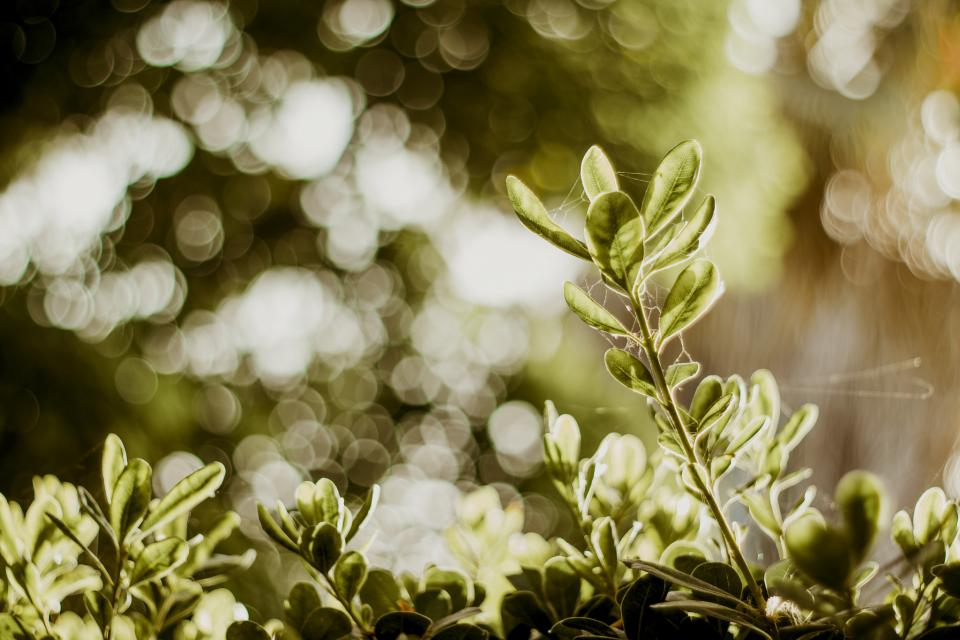 green leaf plant nature blur bokeh outdoor