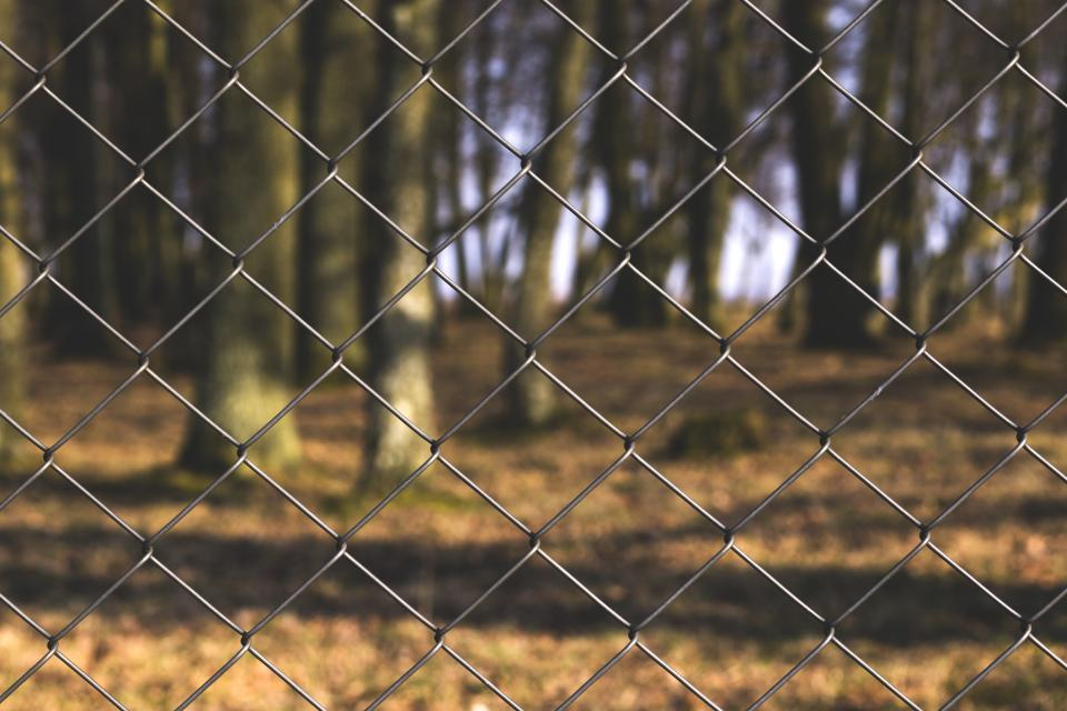 chainlink fence park nature trees forest woods outdoors