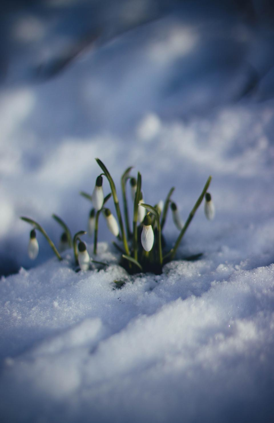 flower green leaf plant nature outdoor snow winter
