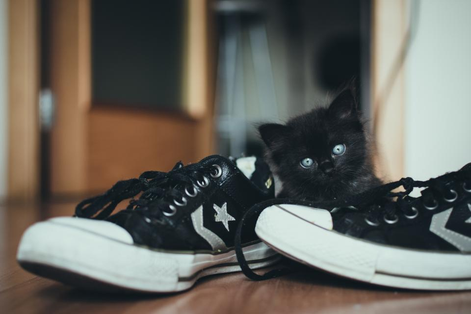 shoes sneakers converse shoelace cat black star leather design floor cute