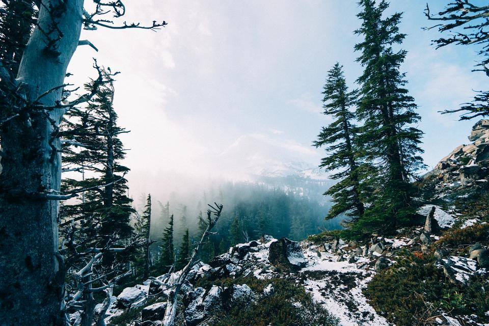trees forest woods mountains sky clouds snow hills peaks nature