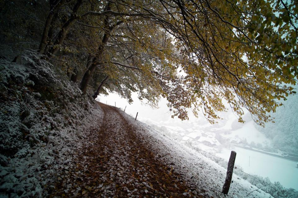 trees landscape snow winter cold leaves ice clouds fence road path house roof pines hills