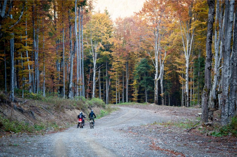 dirt bikes motorbikes bikers road trees forest woods autumn fall