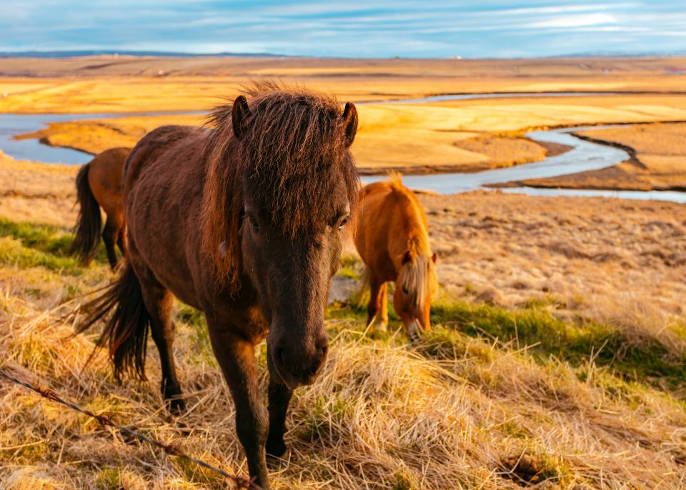 green grass outdoor horse animal nature river water view