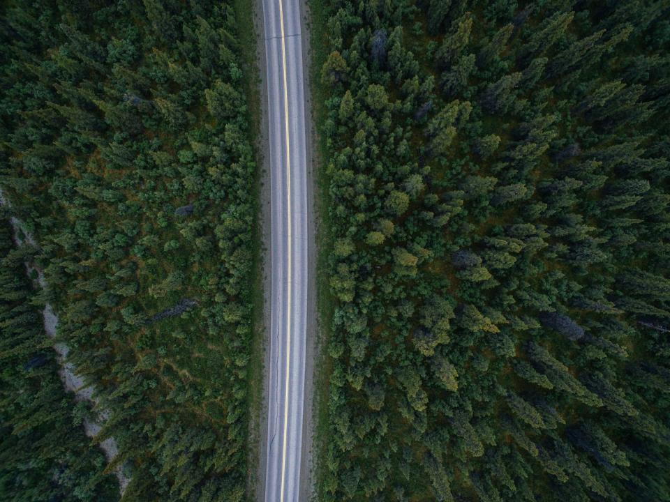 road trees forest nature aerial view