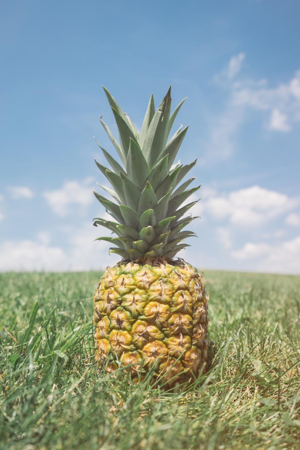 pineapple dessert appetizer fruit juice crop nature grass clouds sky