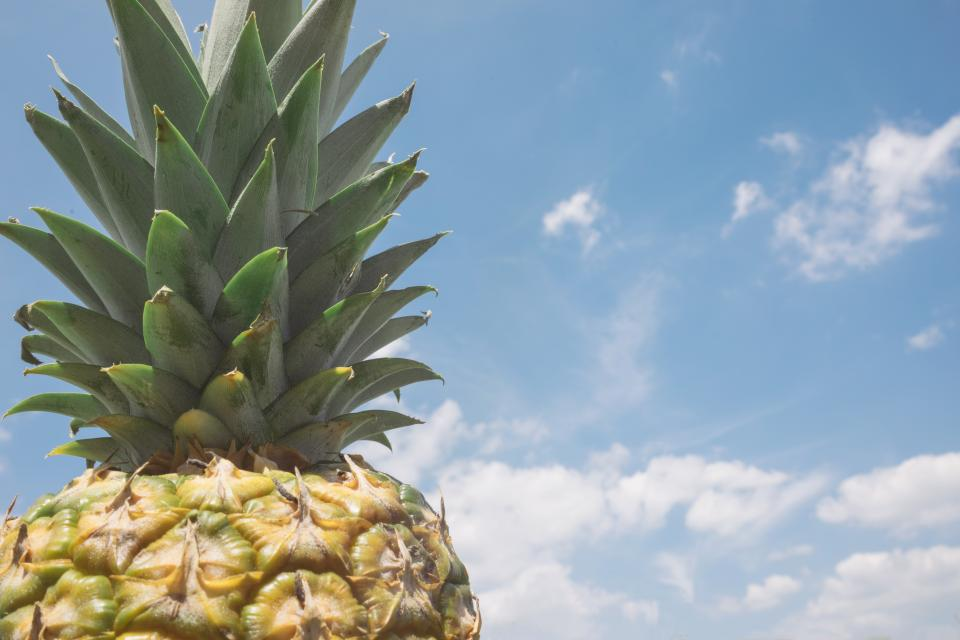 pineapple dessert appetizer fruit juice crop clouds sky