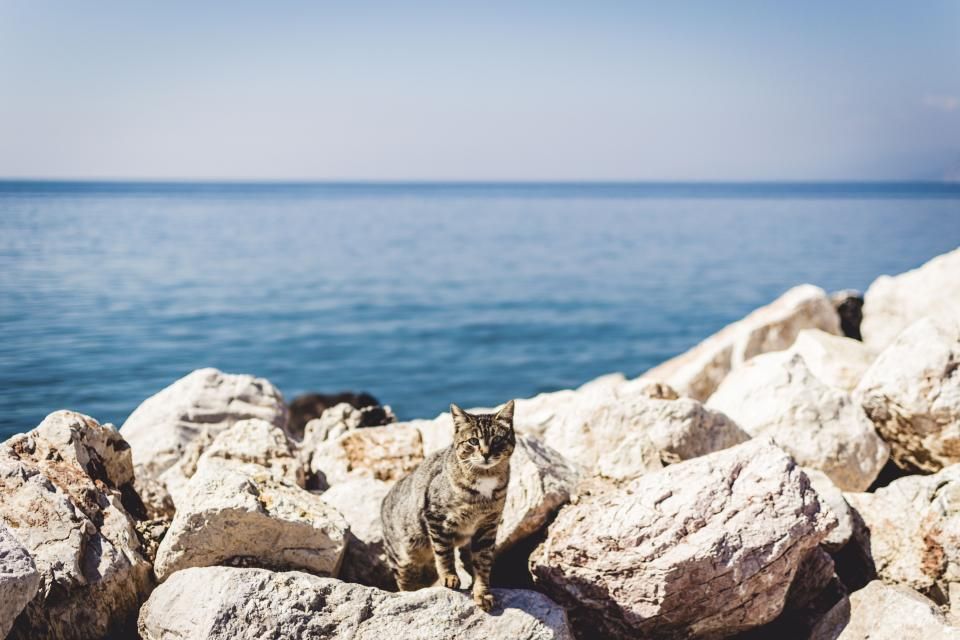 blue ocean sea water horizon sky rocks summer coast cat animal pet