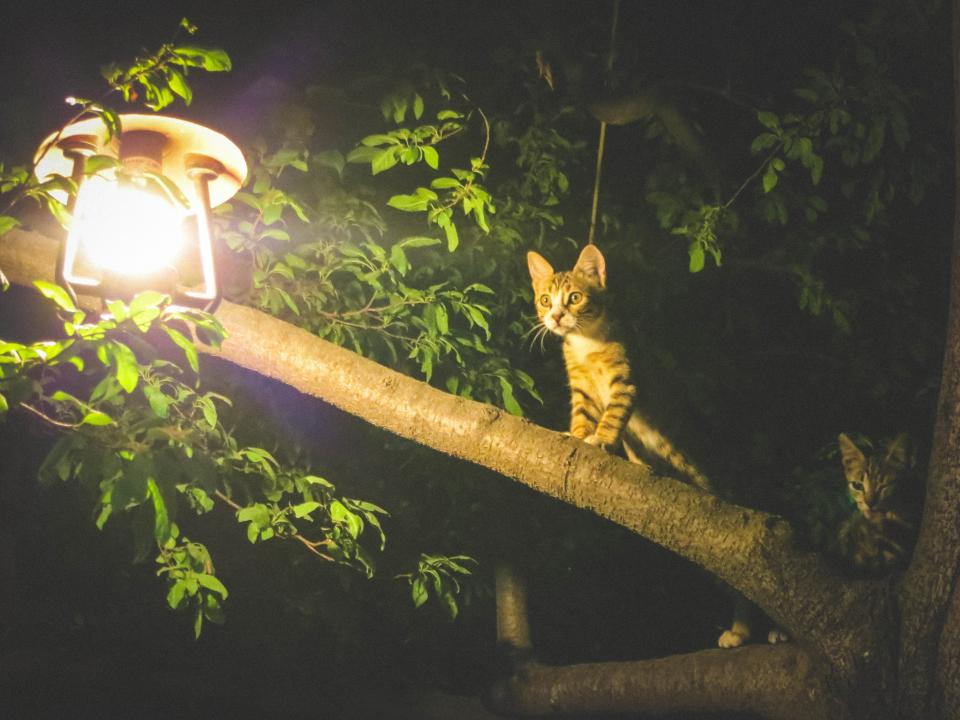 cats animals light bulb tree leaves branches night dark