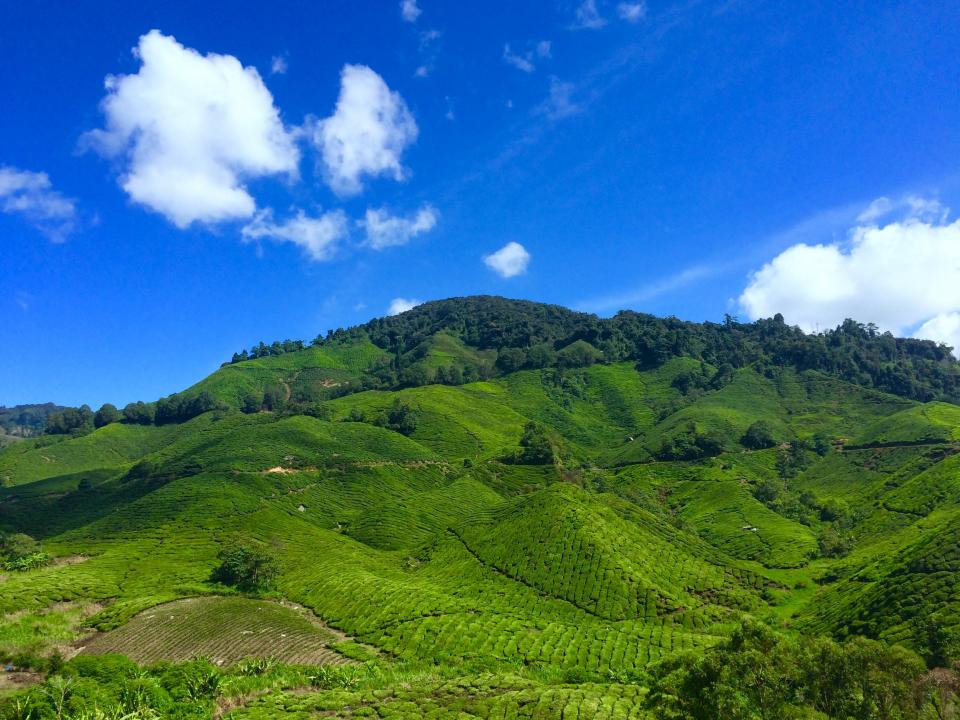 mountain highland green trees plant nature field crops agriculture blue sky cloud landscape view