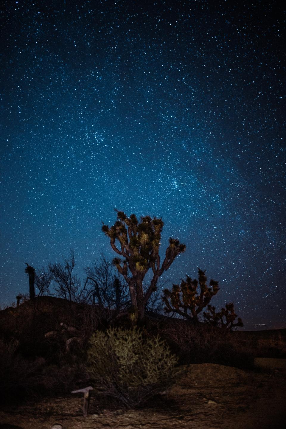 blue sky night stars plants cactus outdoor highland landscape nature