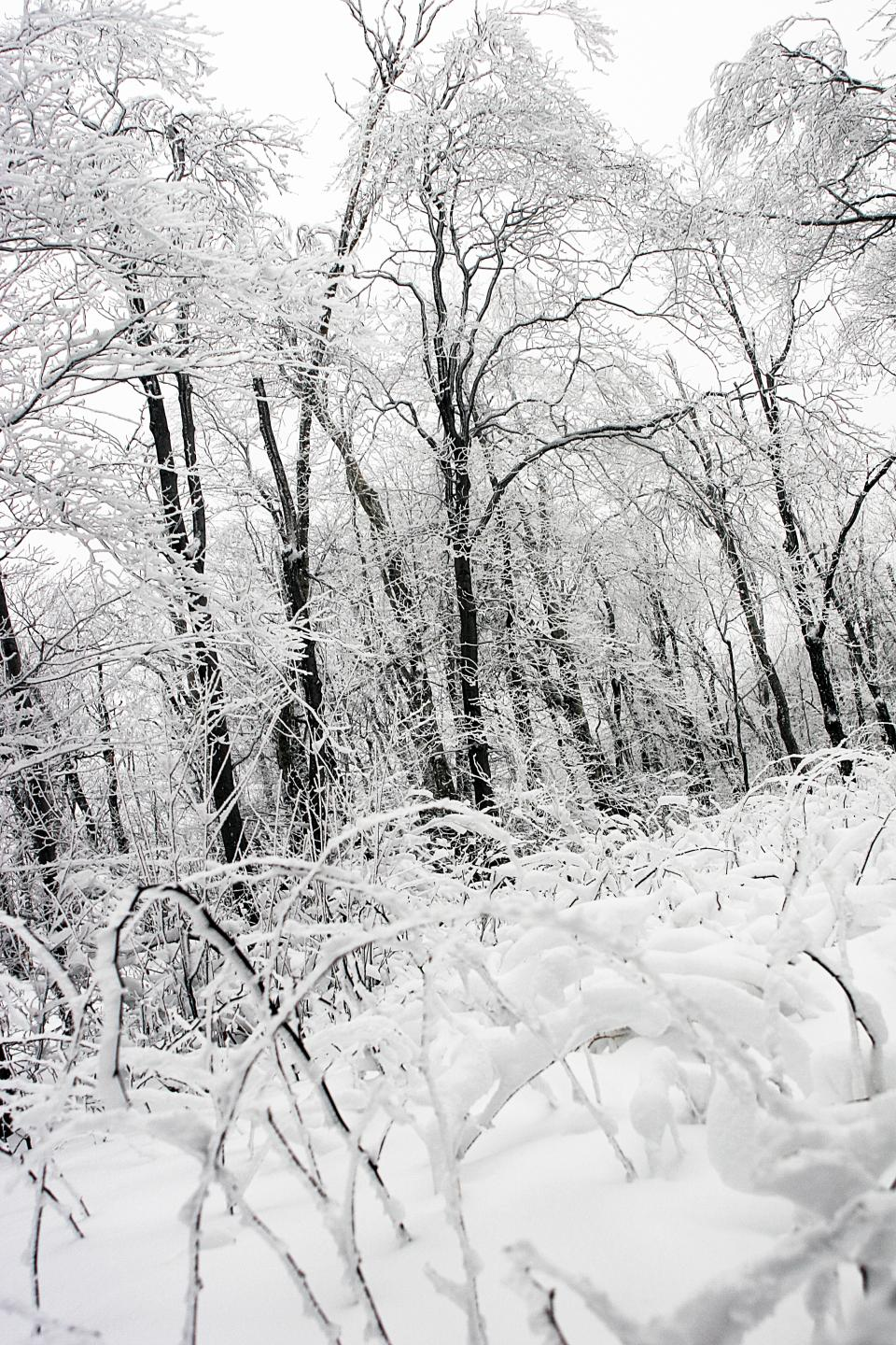 winter snow ice frozen freeze cold trees nature forest woods black and white