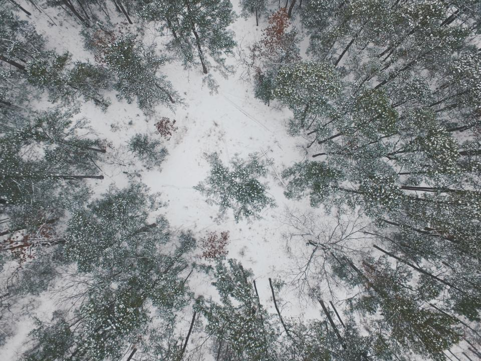 nature landscape snow winter cold weather trees leaves green travel adventure aerial