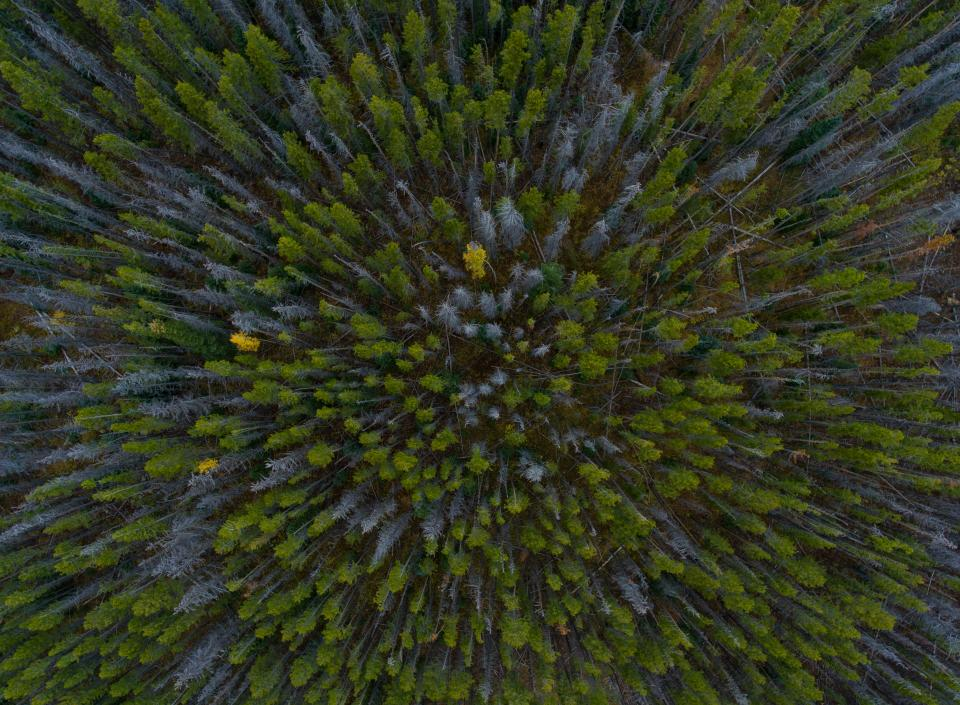 aerial trees woods green leaves nature drone summer forest