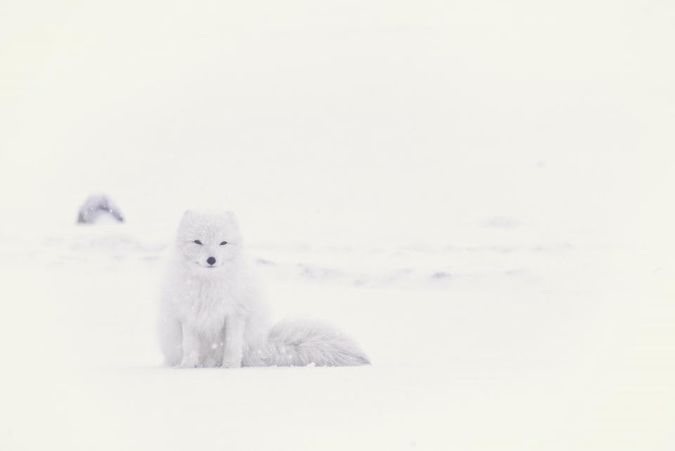 snow winter white cold weather ice nature arctic animal bear