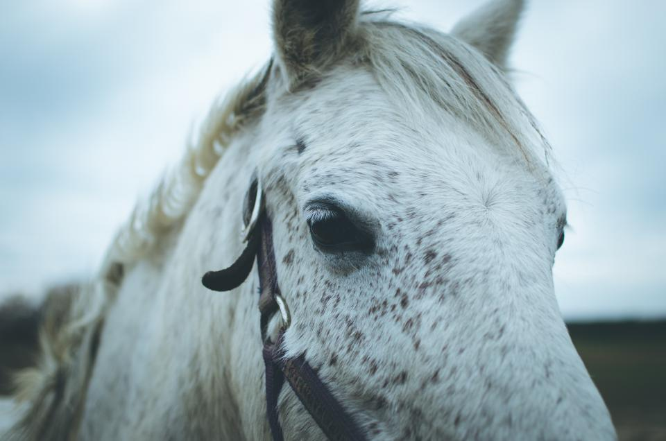 horse animal outdoor sky nature