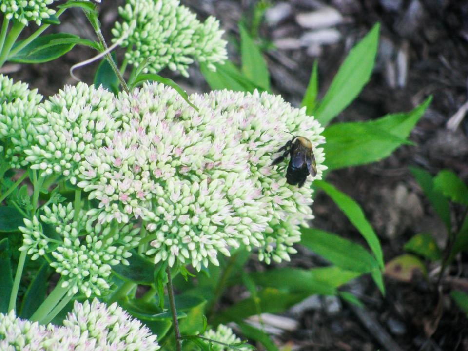 flowers plants garden insect bumble bee