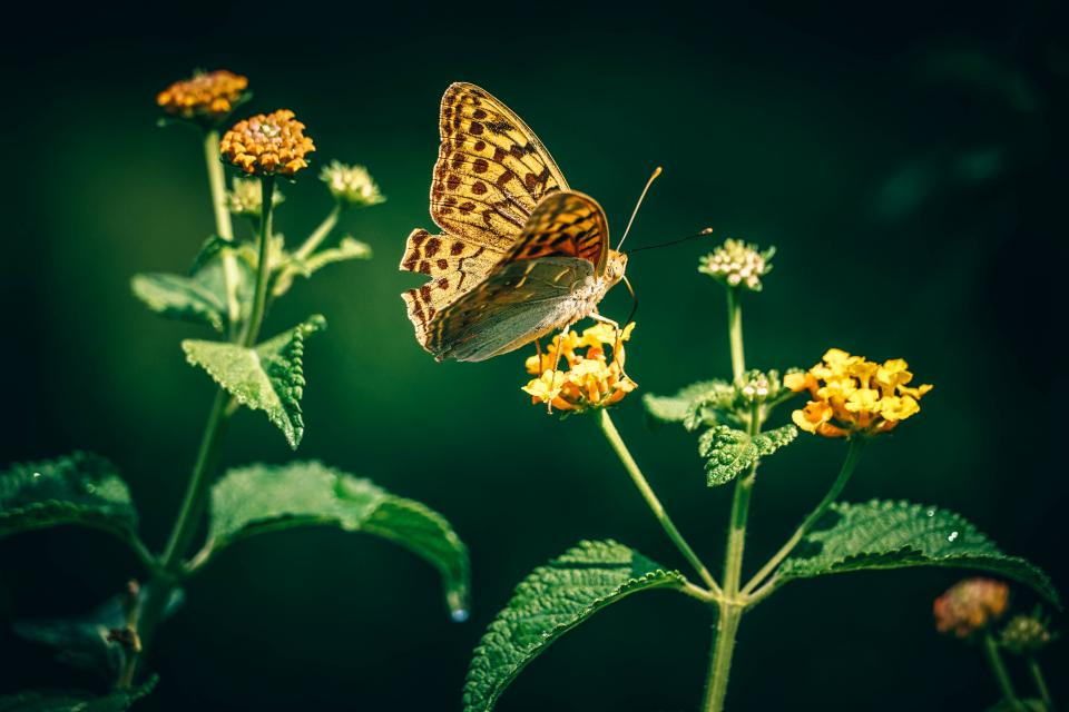 flower butterfly insect green leaf nature dark light