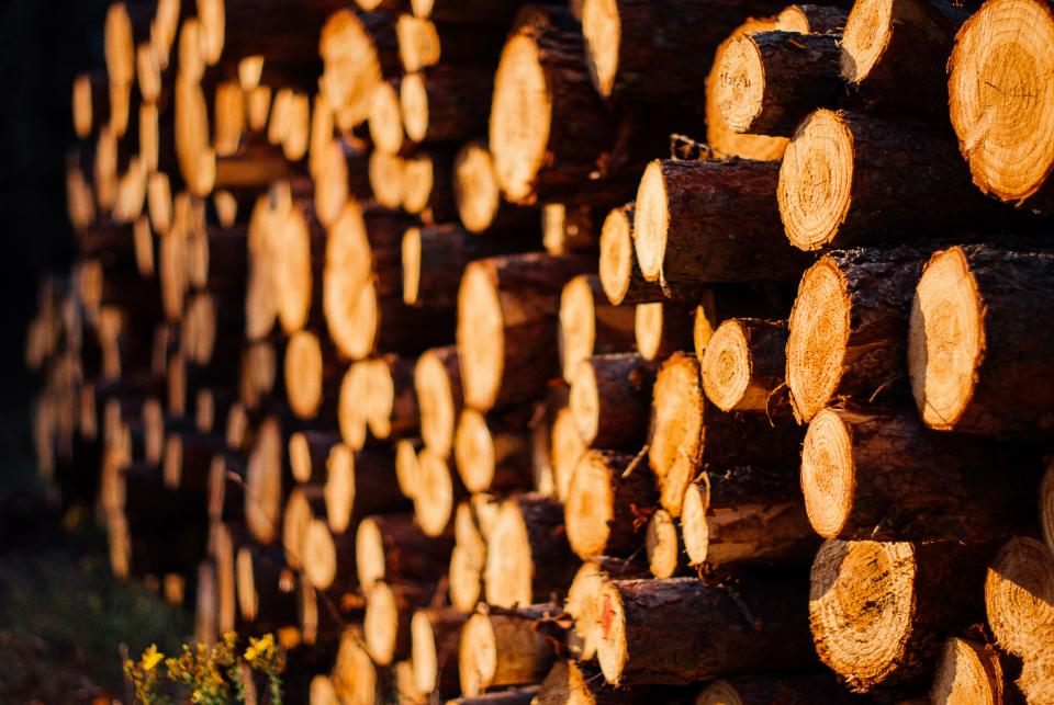 wood logs lumber