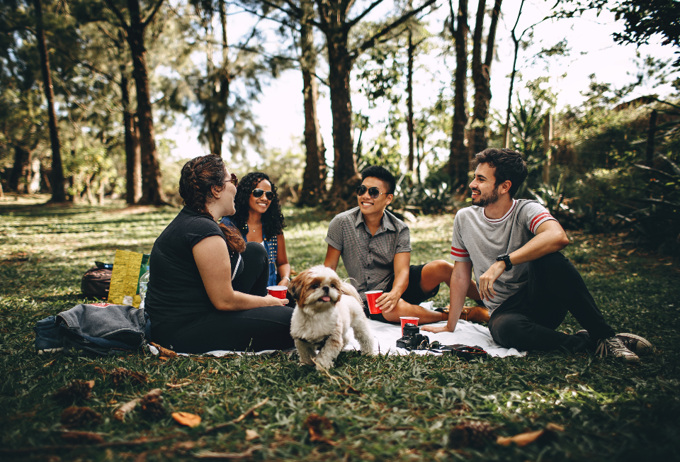 friends picnic park dog animal people male female man woman chat talk.pet tree nature