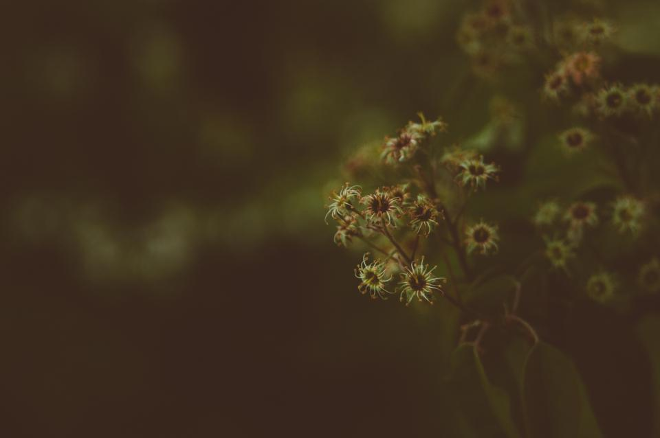 dark blur bokeh flower plants