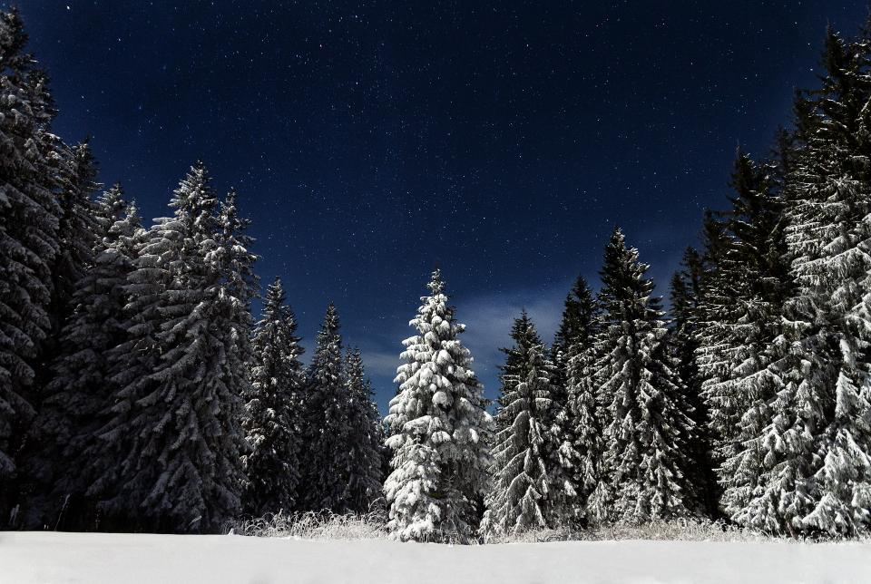 nature landscape woods forest snow winter cold weather dark night stars stargazing travel adventure