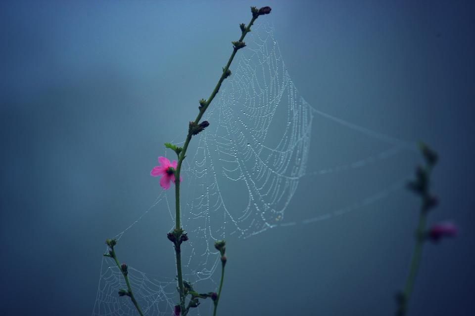 nature flowers branches stalks stems spider web pink bokeh still