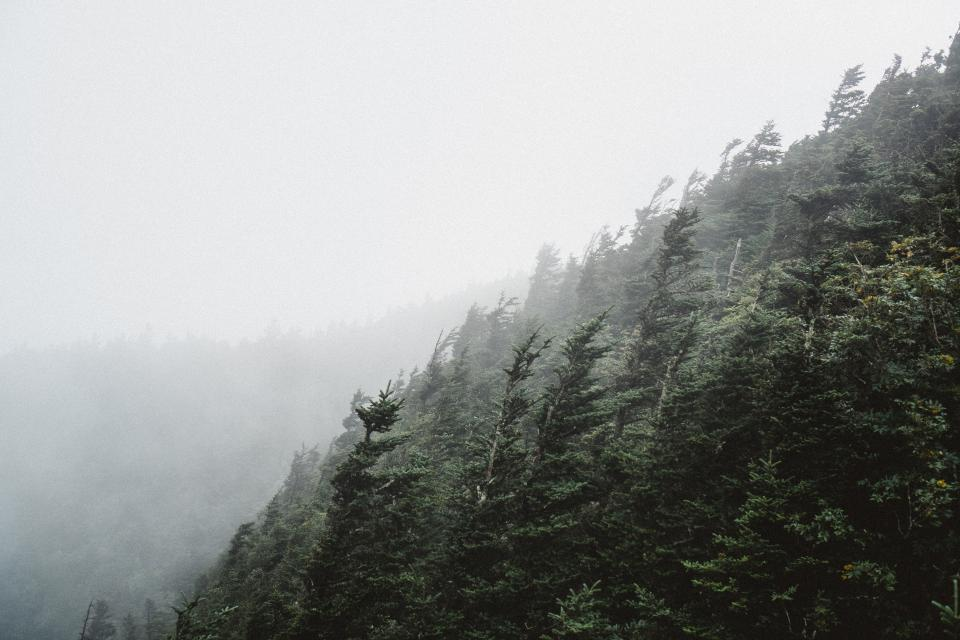 green trees plant nature mountain forest fogs cold