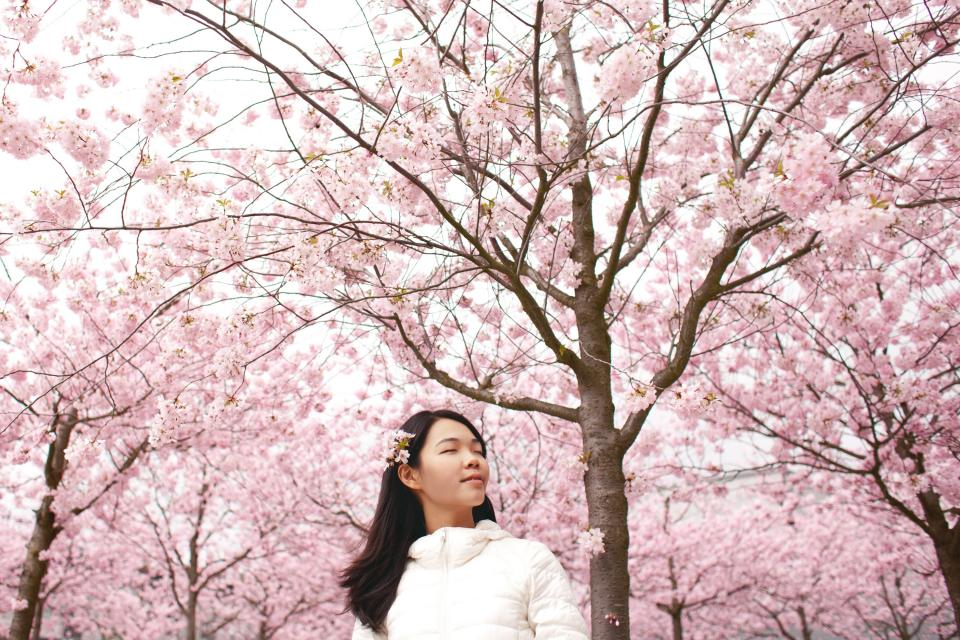 flower blossoms pink winter nature petals people girl trees