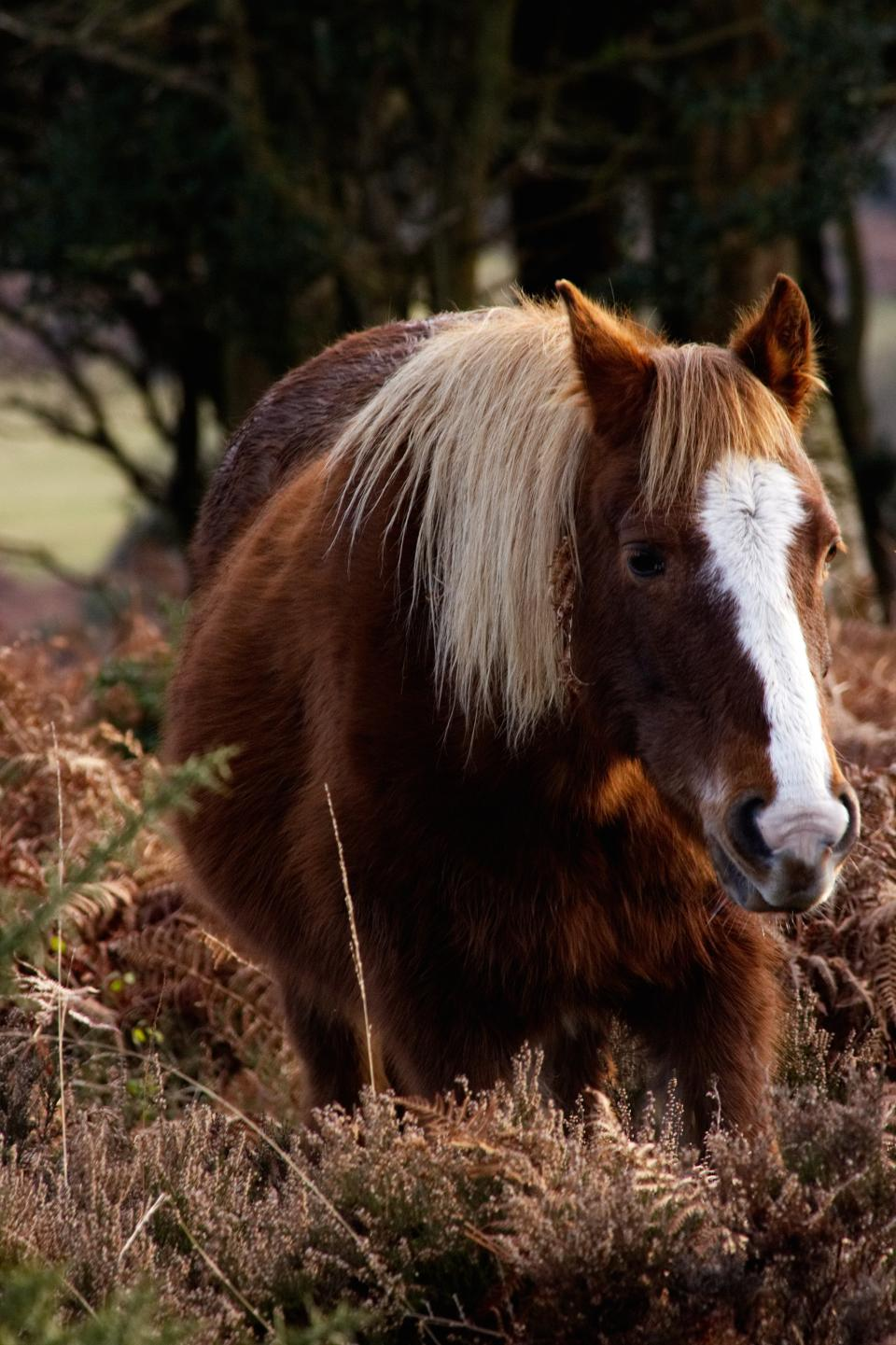horse animal brown grassland plant trees woods snout