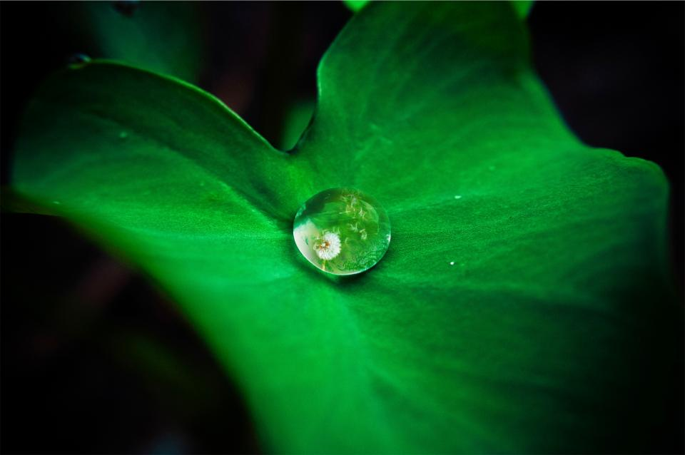 green leaf water drop