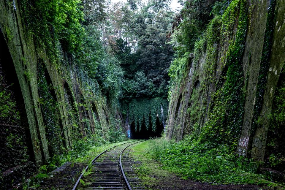 railroad railway train tracks transportation green moss plants trees vines