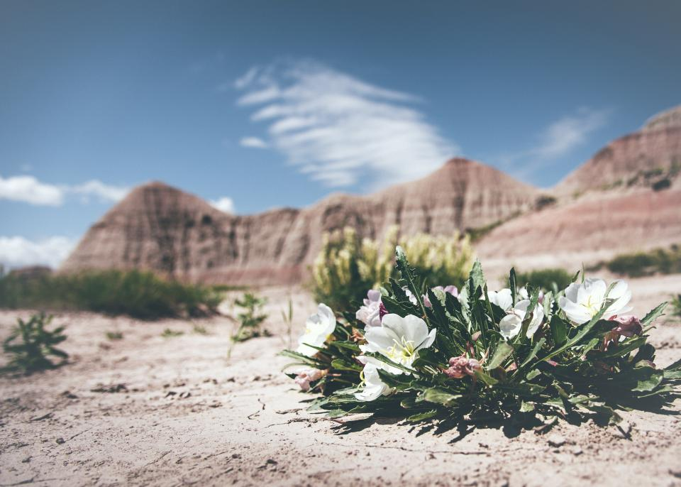 flower desert rocks sand grass clouds sky